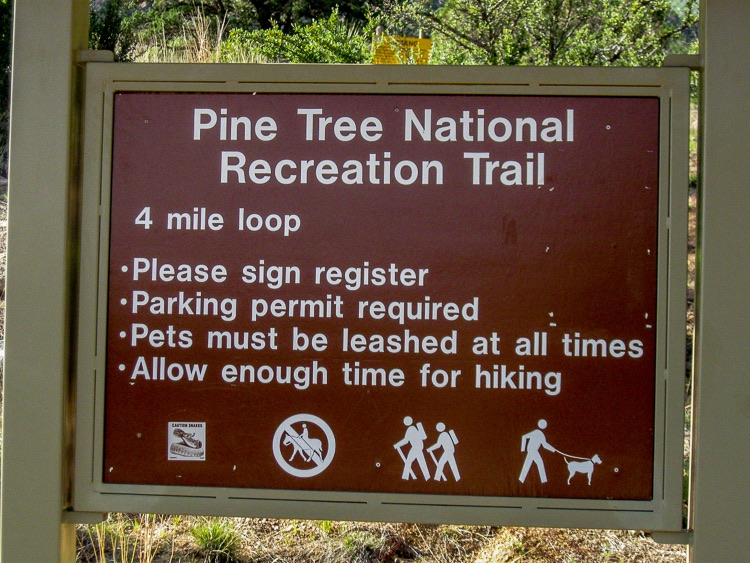 Pine Tree Trail Sign