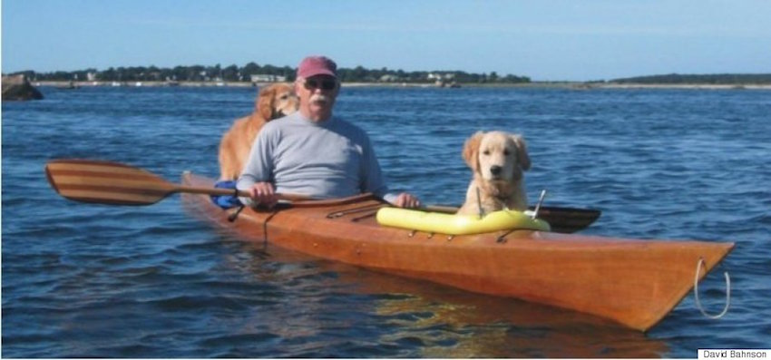 Golden Retrievers Kayaking with their owner