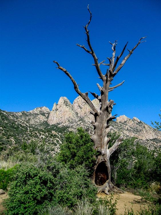 Spooky hollowed tree