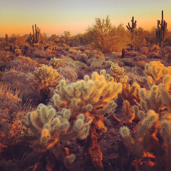 Sonoran Desert Scene - iPhone6