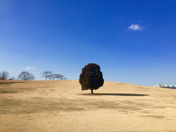 Lonesome Tree - iPhone6