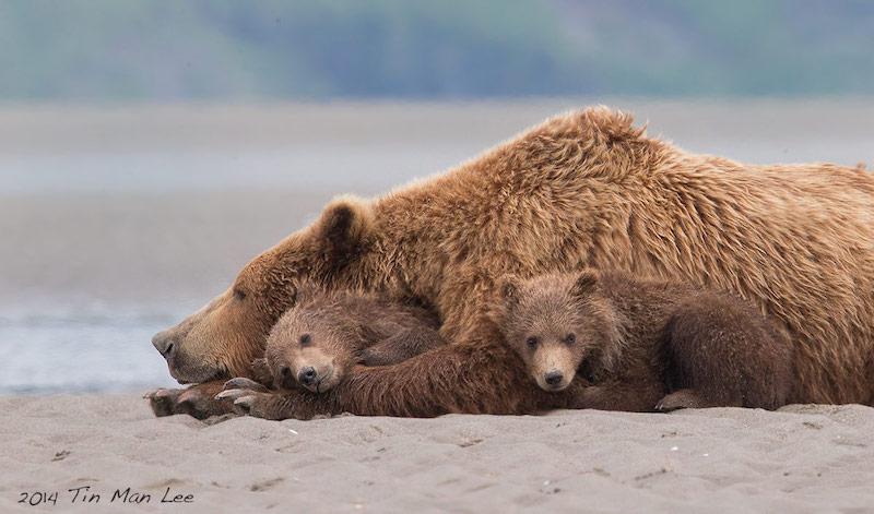 Bear family bond