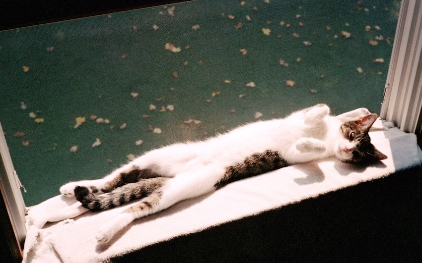 Kitty Carlisle resting in an open window.