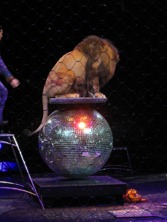 Lion on Rotating Ball