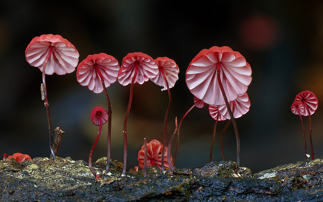 Beautiful picture of fungi from Australia