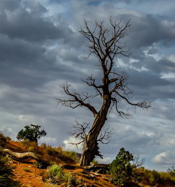 dead tree, spooky, Monument Valley, Utah