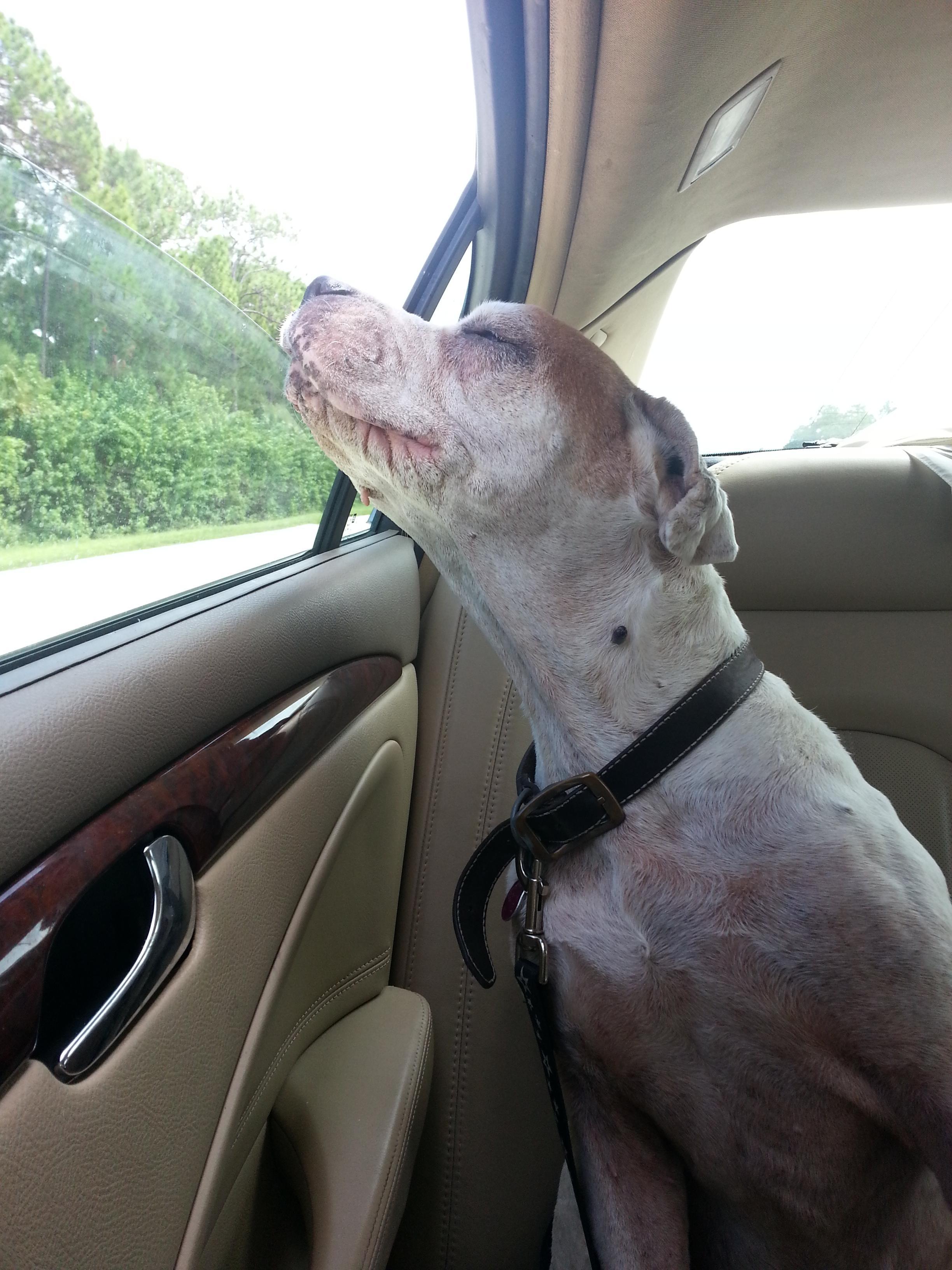old dog's last ride
