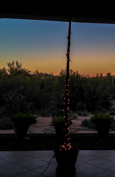 Holiday Lights - Back Patio Agave Spike
