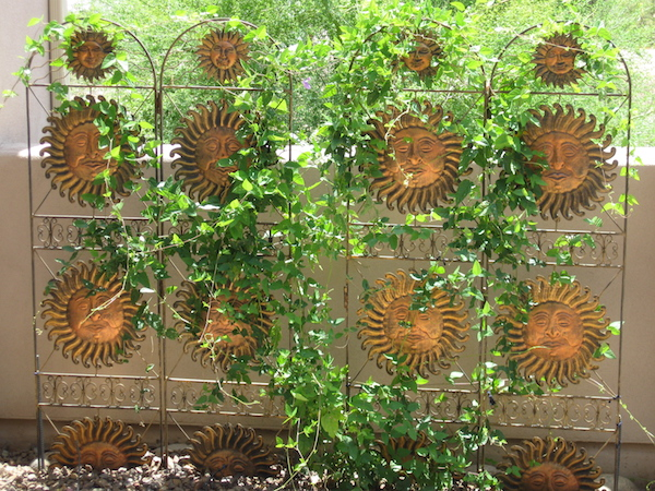 Sun Trellis with Snail Vine