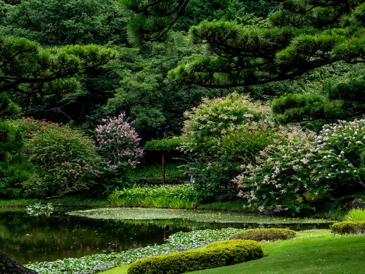 Garden grounds with flowering shrubs