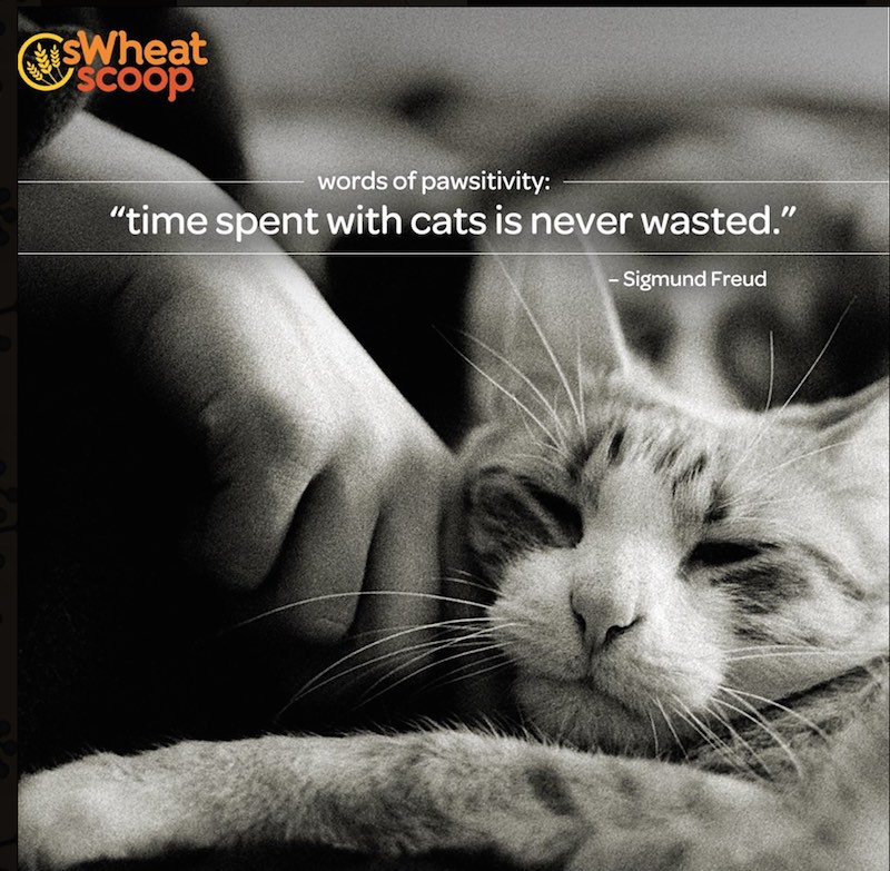 Picture Quote:Time spent with cats is never wasted. - Sigmund Freud