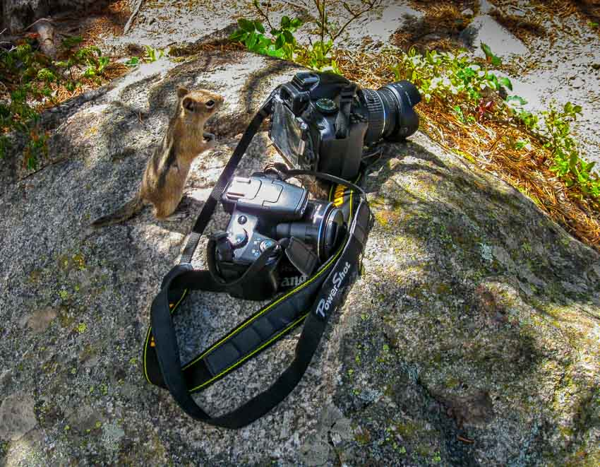 Chipmunk wants to be a photographer