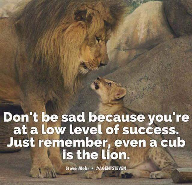 Don't be sad because you're at a low level of success. Just remember, even a cub is the lion.