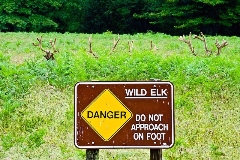 Beware of Elk