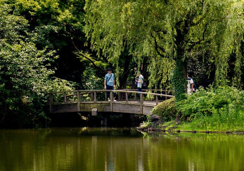 Bridge over narrow area of pond