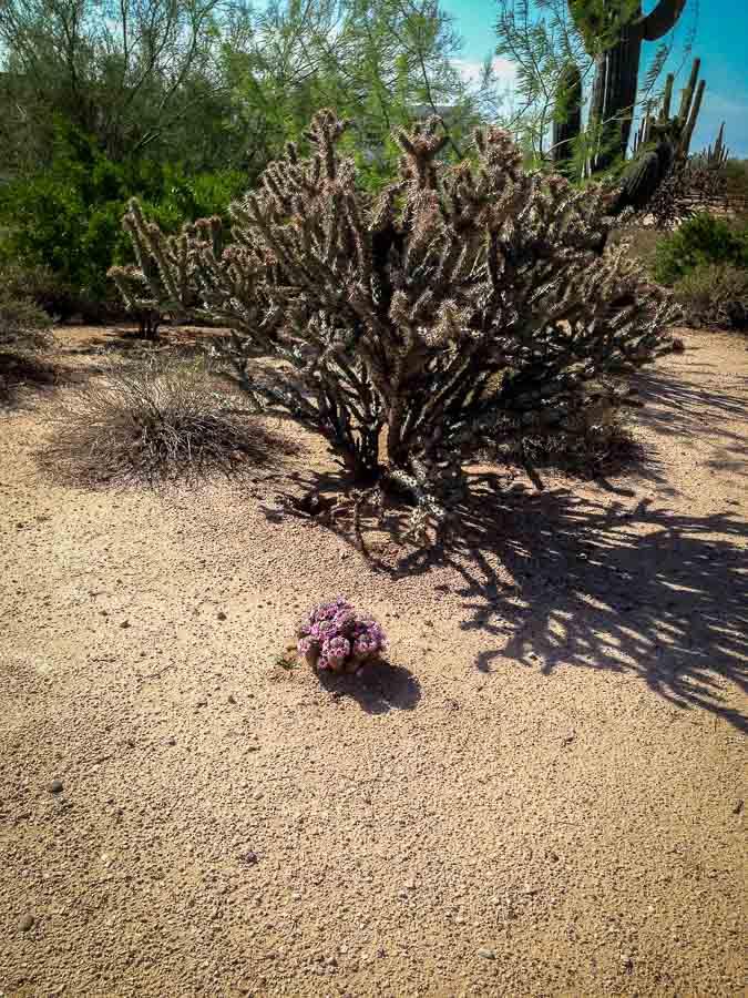 desert plants after a rain