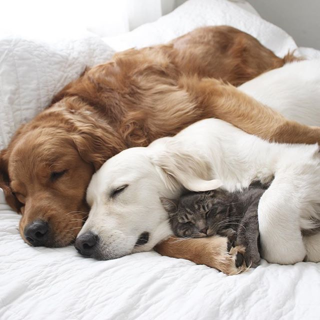 Nested Pets - Two Dogs and a Cat