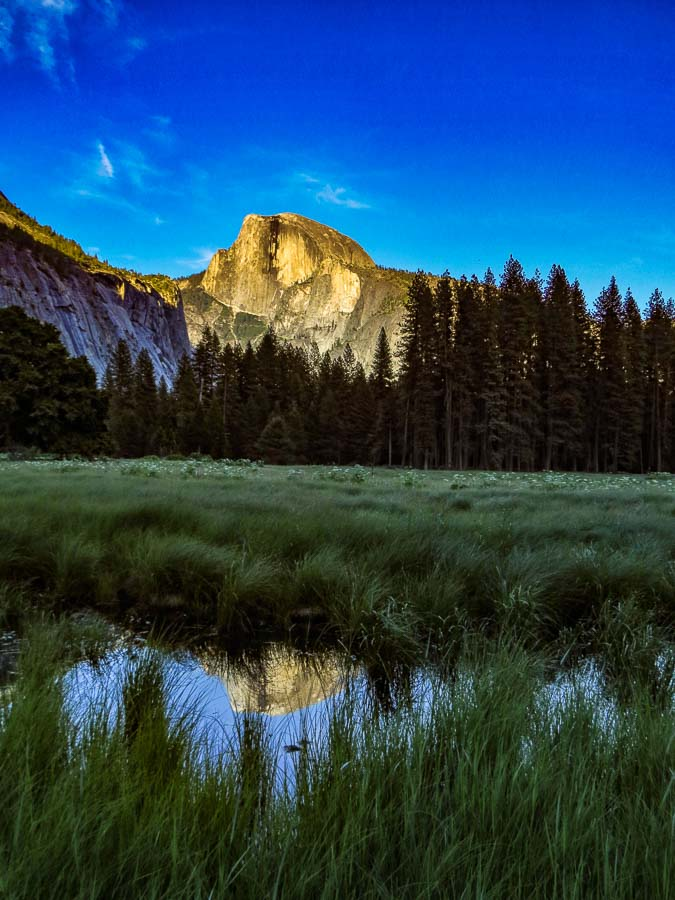 Half Dome from the Meadow