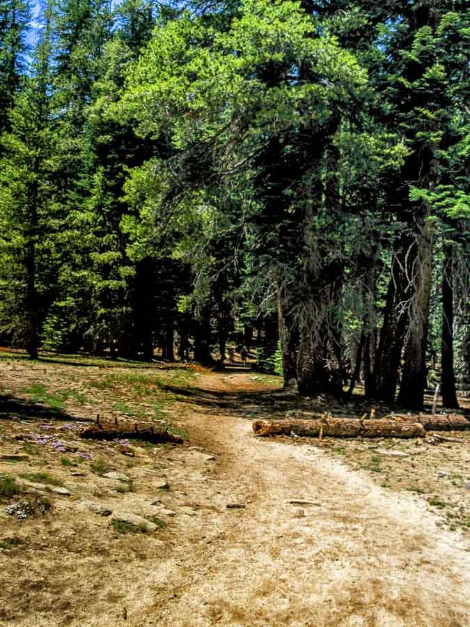 Beginning of the Taft Pt. Trail
