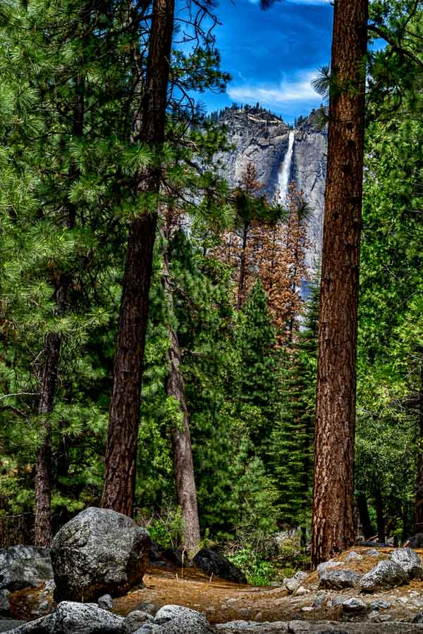 Yosemite Falls as seen from the woods