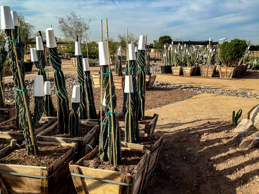 Agave Farm picture