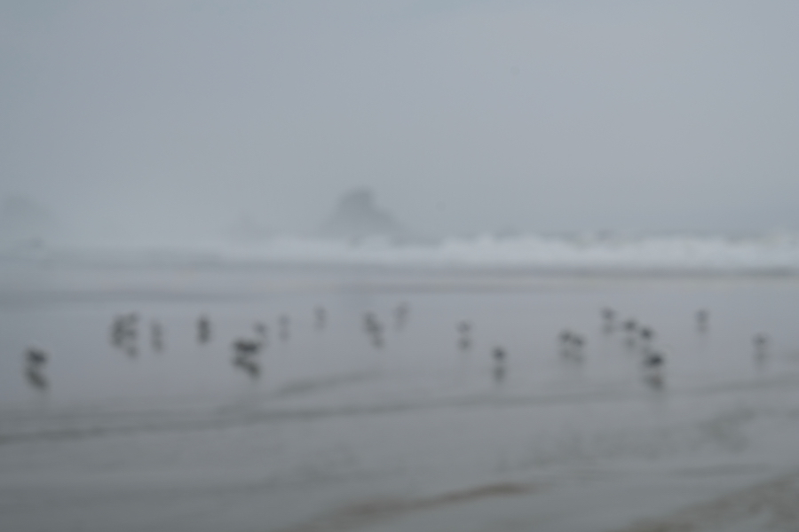 Picture of birds on the beach in OR out of focus