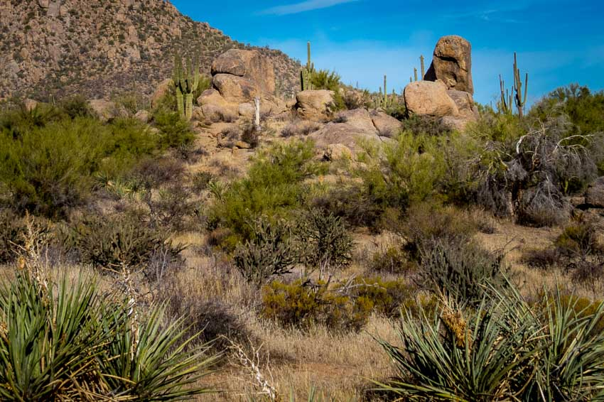 Numerous boulders along the trail
