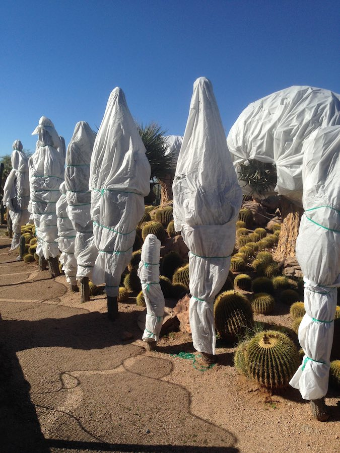 Cactus appear as ghosts in the desert