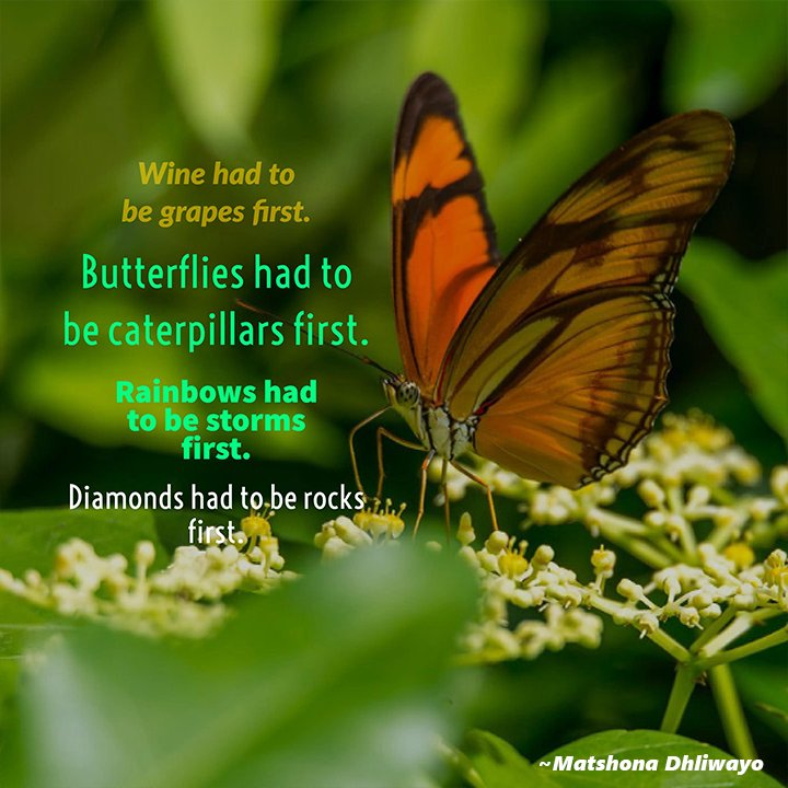 Wine had to be grapes first. Diamonds had to be rocks first. Butterflies had to be caterpillars first. Rainbows had to be storms first - Matshona Dhliwayo