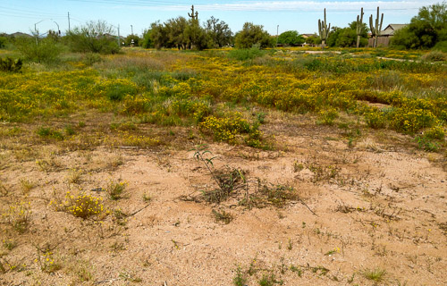 Desert weeds along the roadside