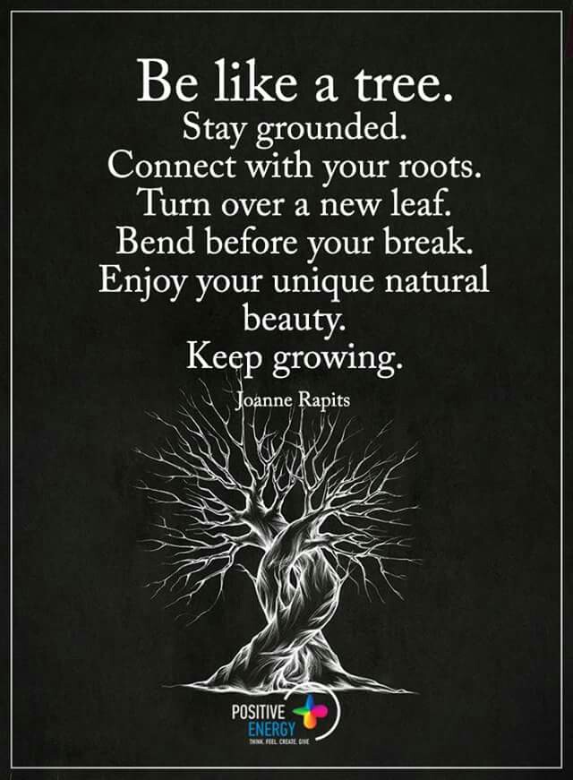 Be like a tree. Stay grounded. Connect with your roots. Turn over a new leaf. Bend before your break. Enjoy your unique natural beauty. Keep growing. - Joanne Rapits