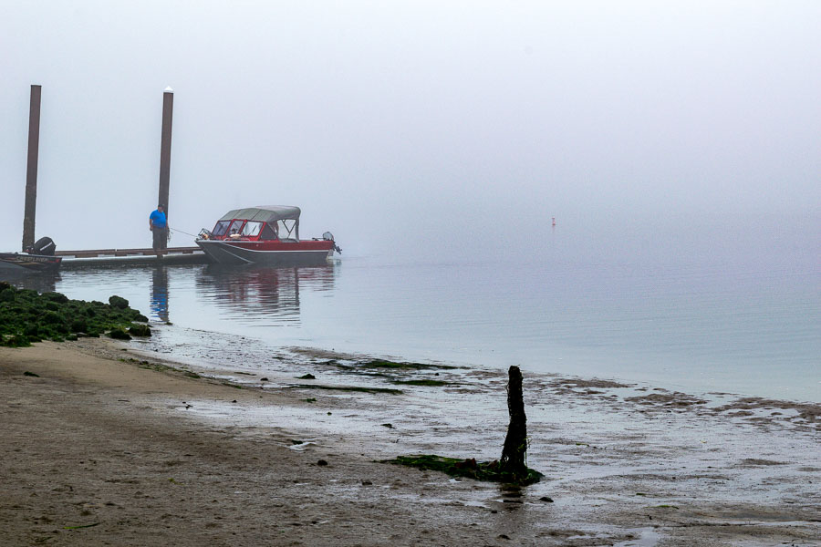 Foggy weather does not deter the fish or crabs
