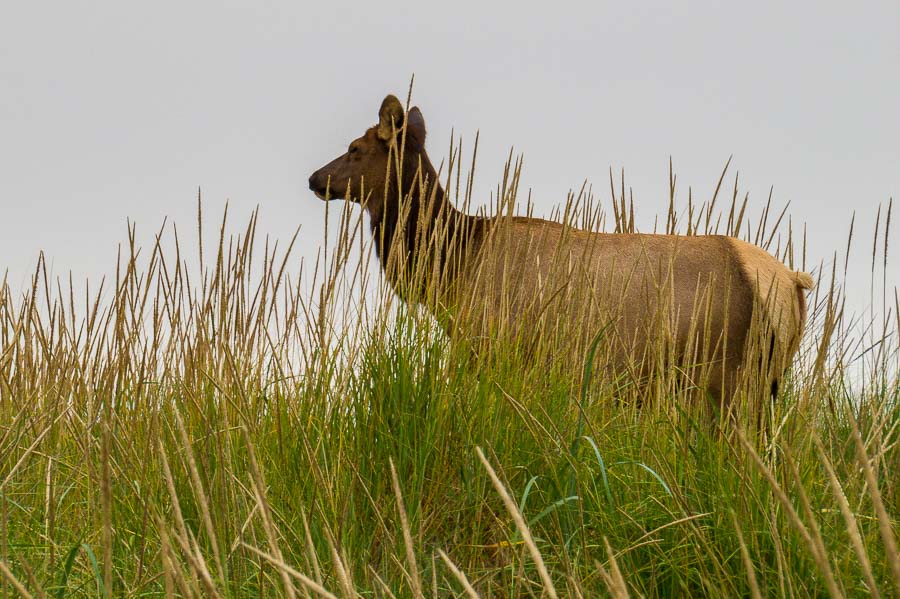 Another doe watched as we walked to the beach