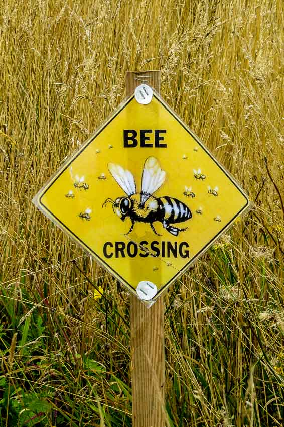 Bee crossing sign - fun!