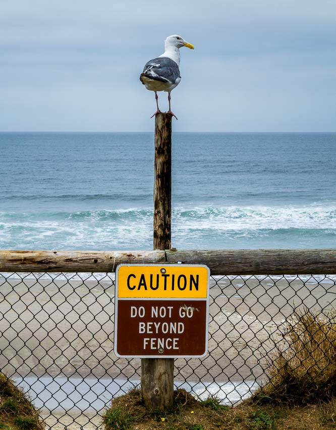 A segull sitting atop a sign to 'stand back'