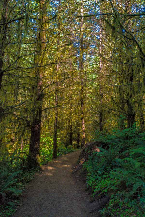 Wooded trail leading to Drift Creek Falls