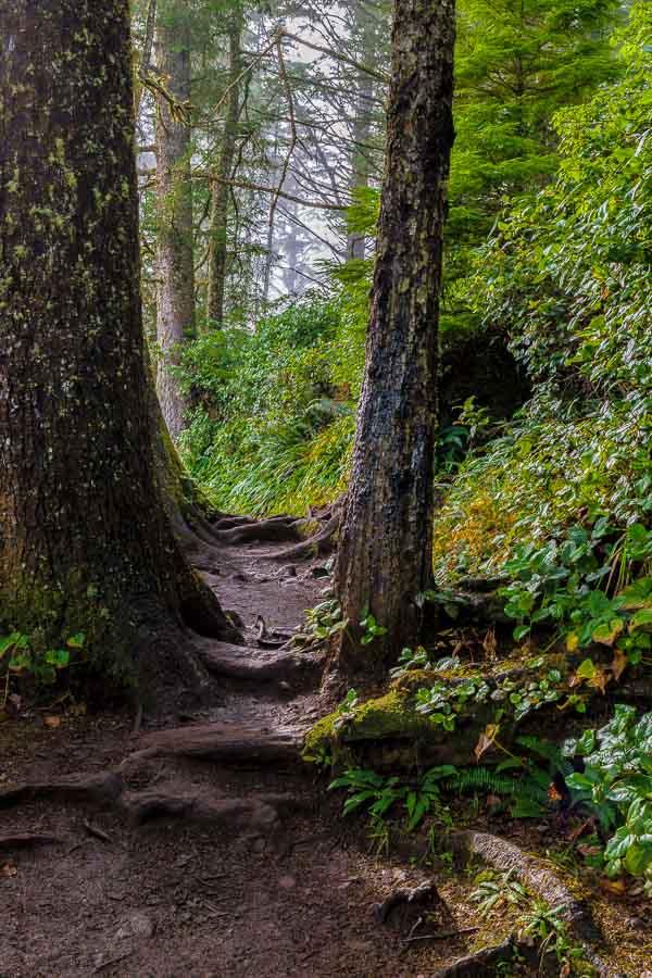 A muddy path