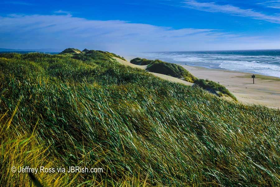 Dune grasses along the beach