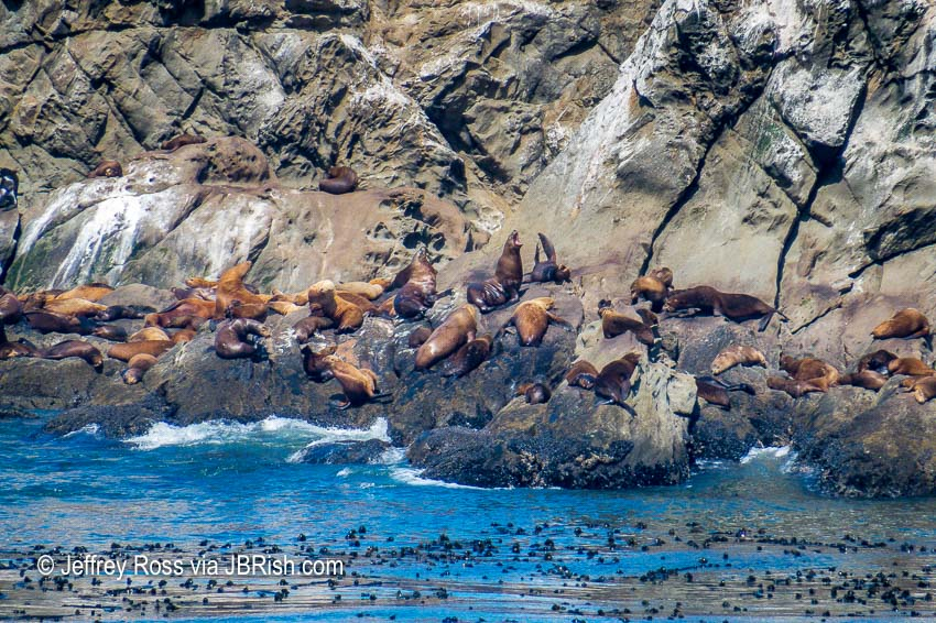 Seals basking on Shell Island