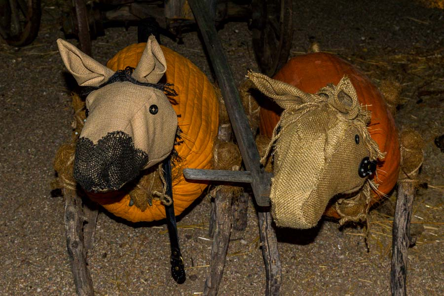 These pumpkin horses are ready to go