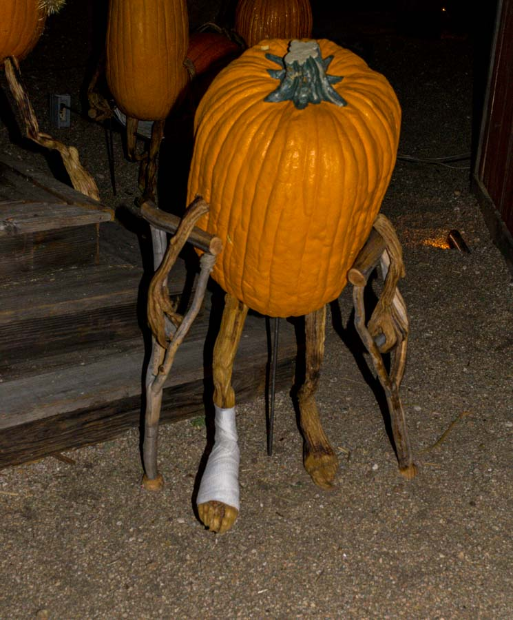 Unfortunate pumpkin has an injured leg