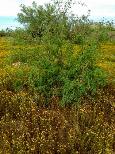Desert weeds along the roadside