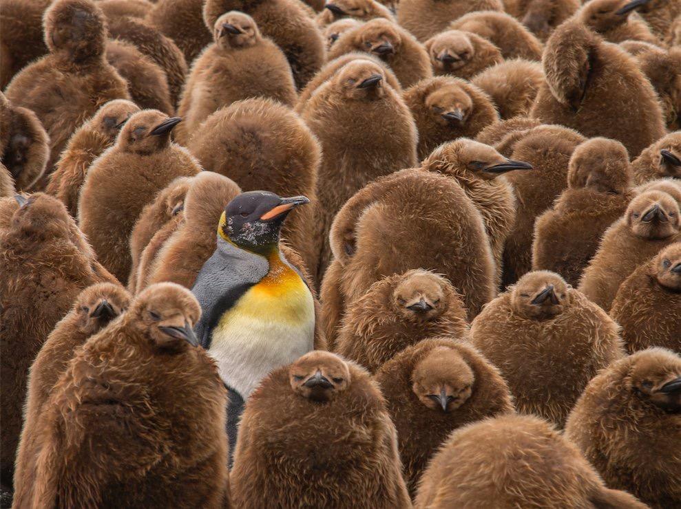 Where's Waldo Penguin