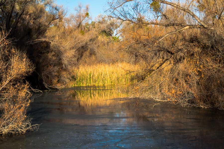 The inviting ponds at the Hassayampa River Preserve