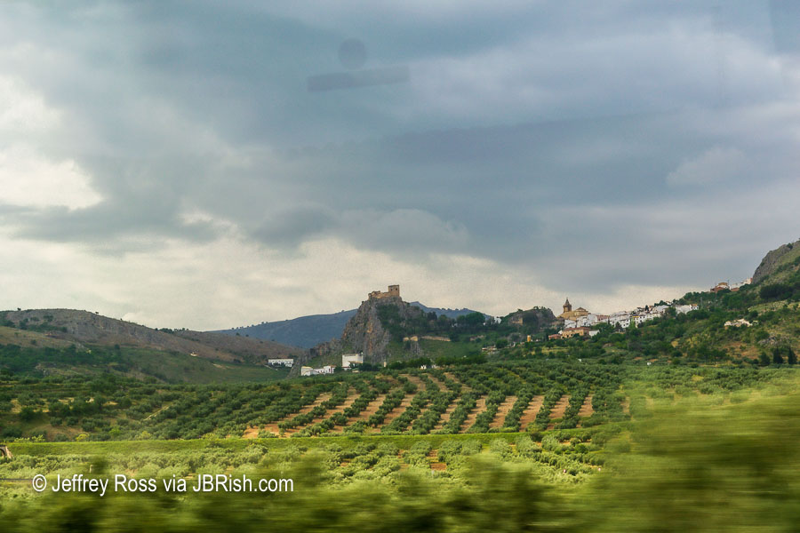 Olive orchards on the way to Cordoba