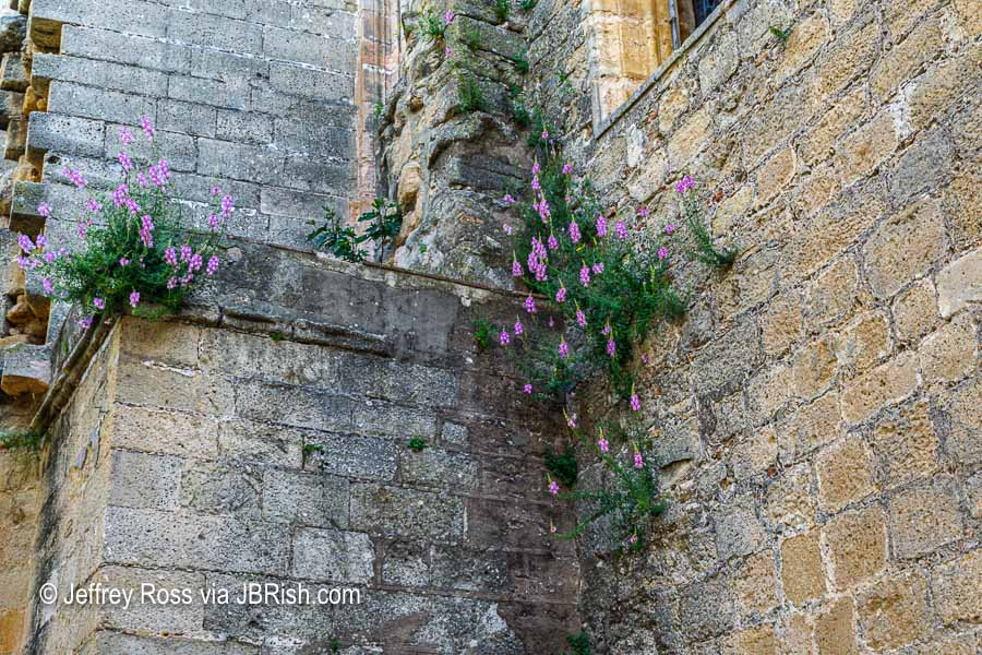 Old wall with wildflowers growing