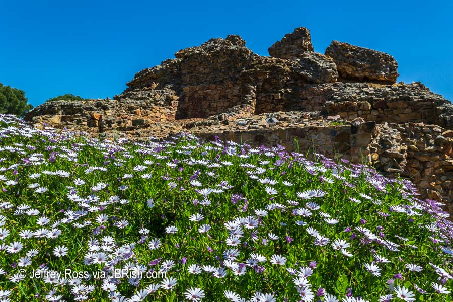 Light pink and purple flowers among the ruins