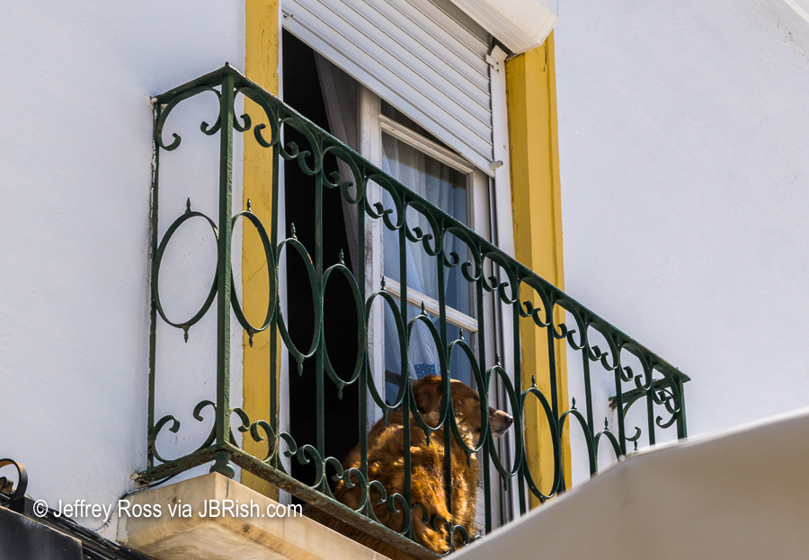 A dog sitting on a small balcony