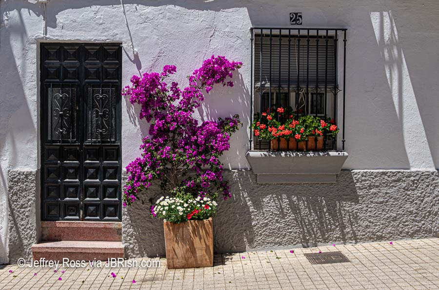 A pretty house view with plants and wooden door