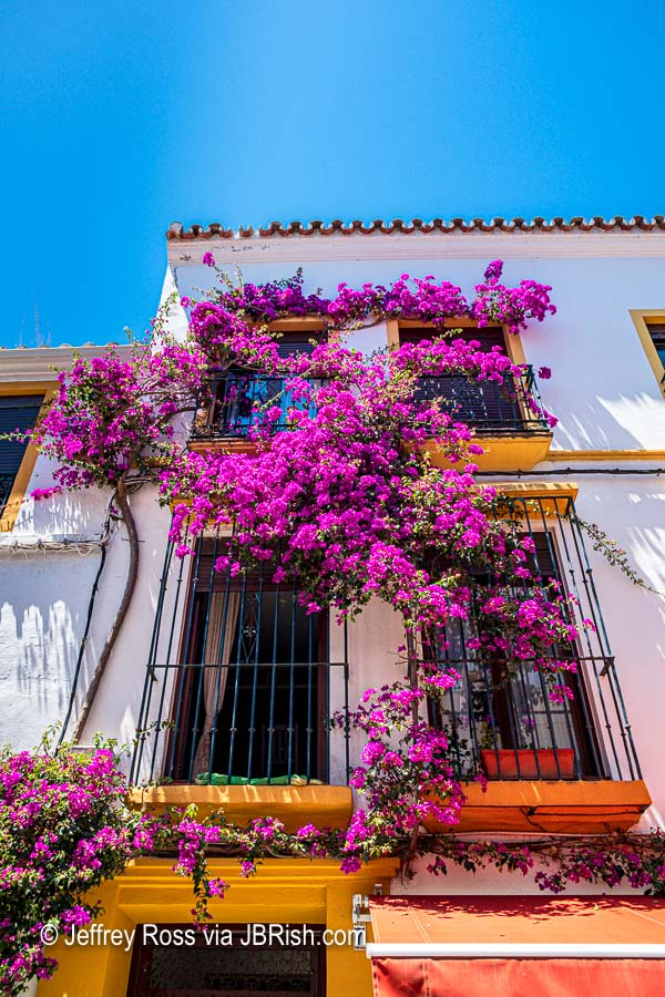Colorful house and bougainvillea